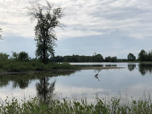 Fitzroy Provincial Park - Heron