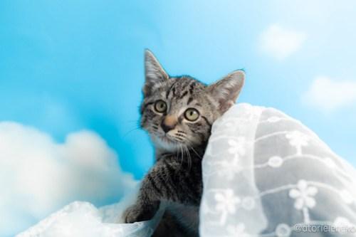 アトリエイエネコ Cat Photographer 43514467965_960ef4e350 1日1猫!なら地域ねこの会さんの猫撮影会♪ 1日1猫!  猫写真 猫カフェ 猫 子猫 奈良 大阪 初心者 写真 保護猫カフェ 保護猫 ハチワレ ニャンとぴあ スマホ キジ猫 カメラ なら地域ねこの会 Kitten Cute cat