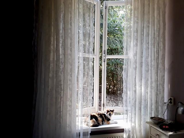Poes op vensterbank vitrage