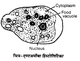 UP Board Solutions for Class 12 Biology Chapter 8 Human Health and Disease 2Q.2