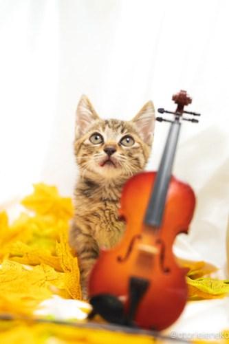 アトリエイエネコ Cat Photographer 43974070615_f13d4d2b10 1日1猫!高槻ねこのおうち 里活中のいろはちゃん♪ 1日1猫!  高槻ねこのおうち 里親様募集中 猫写真 猫カフェ 猫 子猫 大阪 初心者 写真 保護猫カフェ 保護猫 スマホ キジ猫 Kitten Cute cat