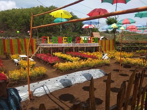 Taman Bunga tempat selfie. tiket masuk umumnya Rp. 5.000,-