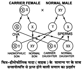 UP Board Solutions for Class 12 Biology Chapter 5 Principles of Inheritance and Variation 4Q.3.2