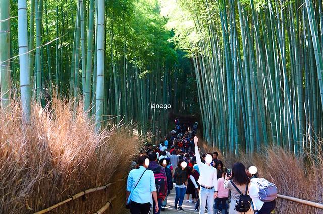 嵐山 竹林 混んでる
