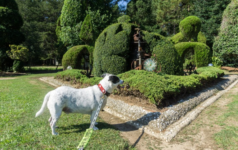 Radcliff Admires One of Many Topiaries at the Pearl Fryar Topiary Garden in Bishopville, S.C., Oct. 5, 2018.