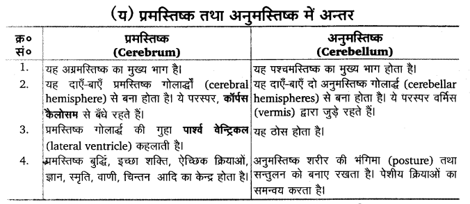 UP Board Solutions for Class 11 Biology Chapter 21 Neural Control and Coordination 22