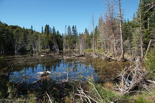 Lake Superior Park- Trapers lake trail