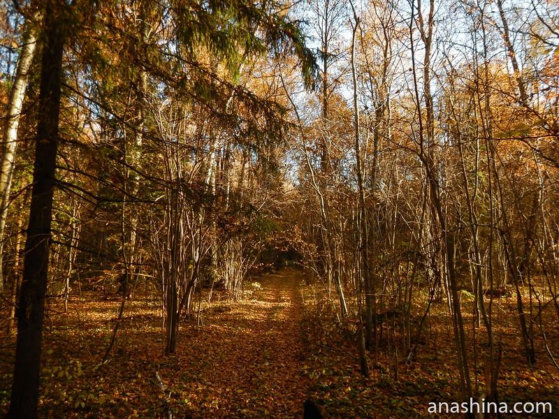 Прозрачный лес, Московская область