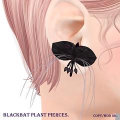 *NAMINOKE*Black Bat Plant Pierces AD