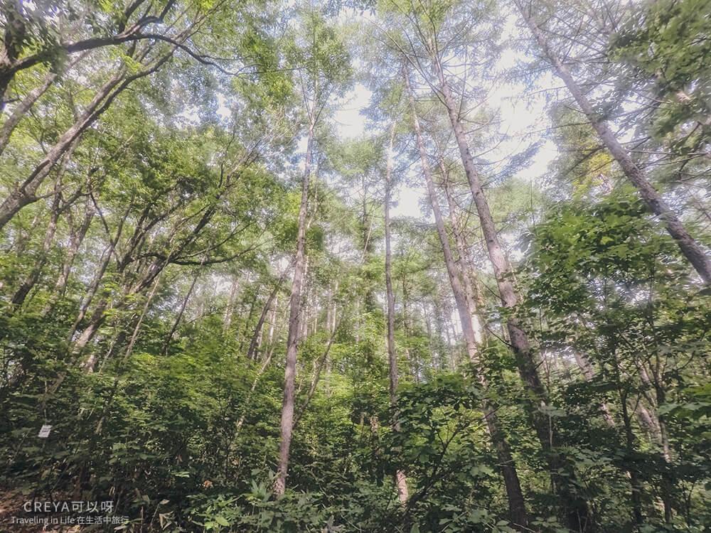 20181018 | 行走在日本東北 | 治癒之森的一堂生命課程,健行在自然首都的福島只見町 25.jpg