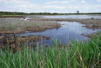 Restored Tomago salt marsh #marineexplorer