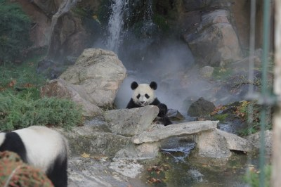 1-year-old Yuan Meng 2018-10-16