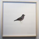 All The Birds I Saw Last Year @ Central Art Garage