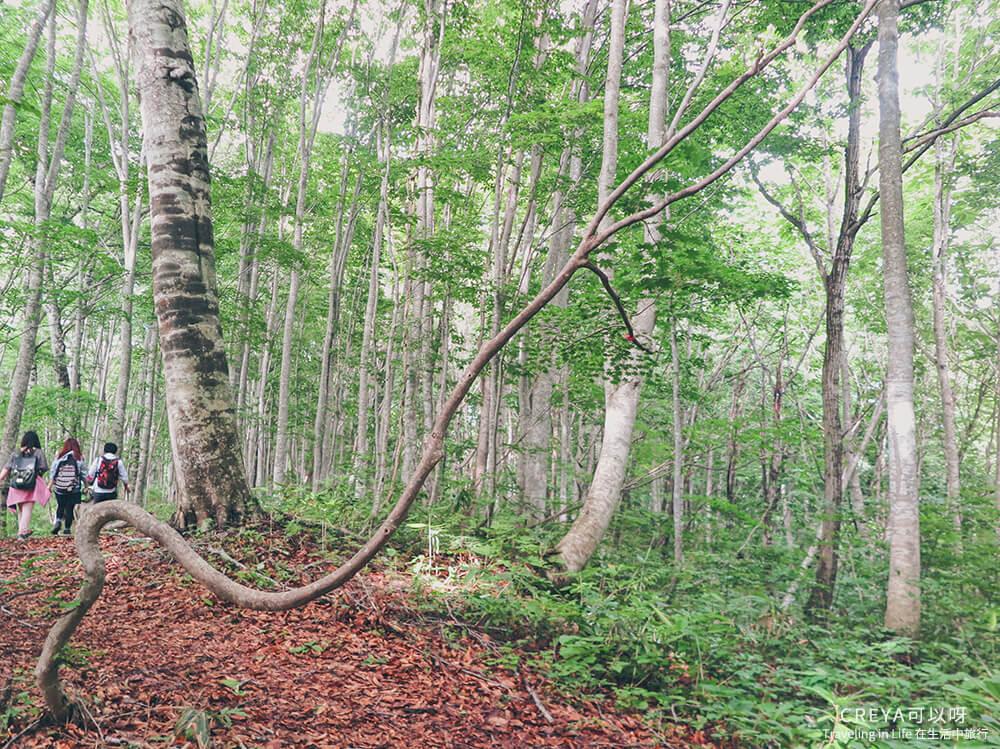 20181018 | 行走在日本東北 | 治癒之森的一堂生命課程,健行在自然首都的福島只見町 21.jpg