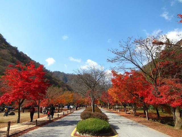 4c. Naejangsan National Park