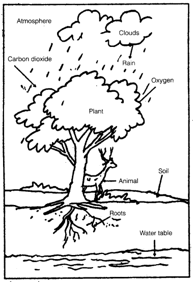 ncert solutions for class 7 science chapter 17 forests our lifeline
