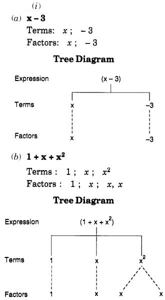 NCERT Solutions for Class 7 Maths Chapter 12 Algebraic Expressions 1