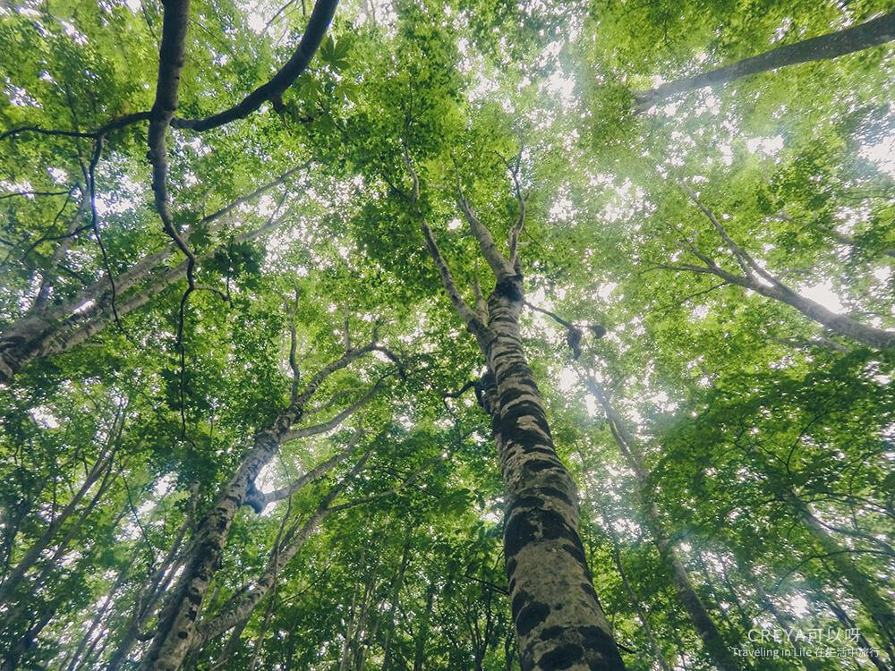 20181018 | 行走在日本東北 | 治癒之森的一堂生命課程,健行在自然首都的福島只見町 04.jpg