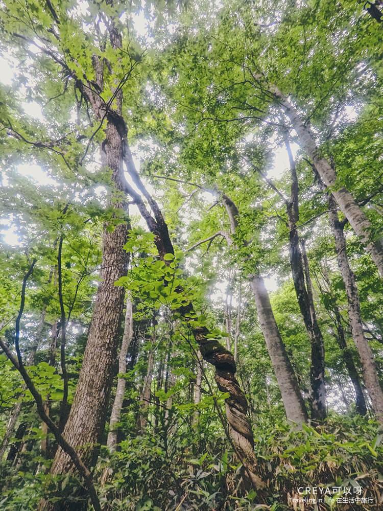 20181018   行走在日本東北   治癒之森的一堂生命課程,健行在自然首都的福島只見町 18.jpg
