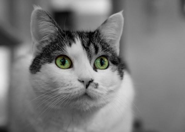 Gisel's Eyes