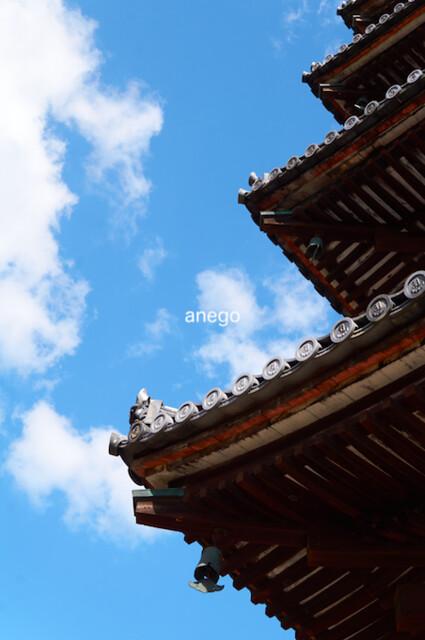 仁和寺 五重塔 見上げる