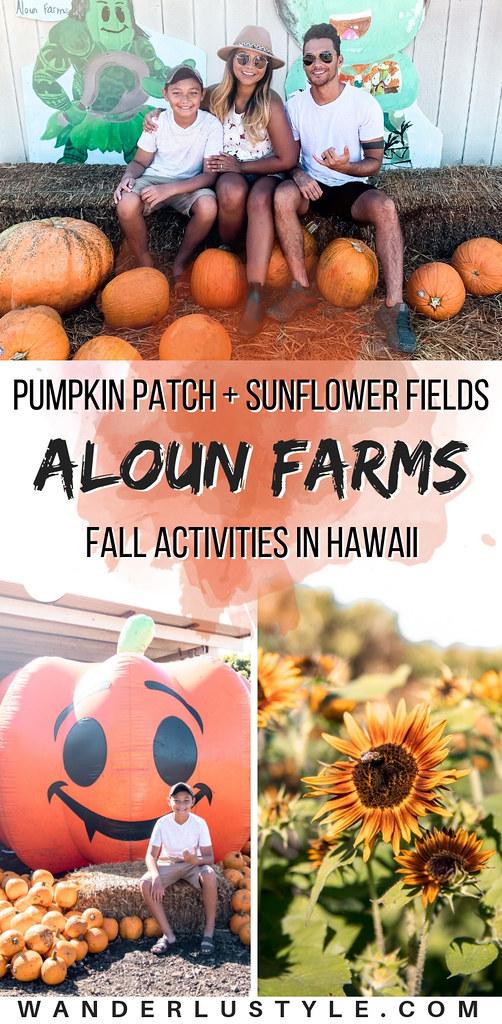 Aloun Farms Pumpkin Patch and Sunflower Fields - Hawaii Fall Activities, Hawaii Pumpkin Patch, Fall in Hawaii, Sunflower Fields Hawaii | Wanderlustyle.com