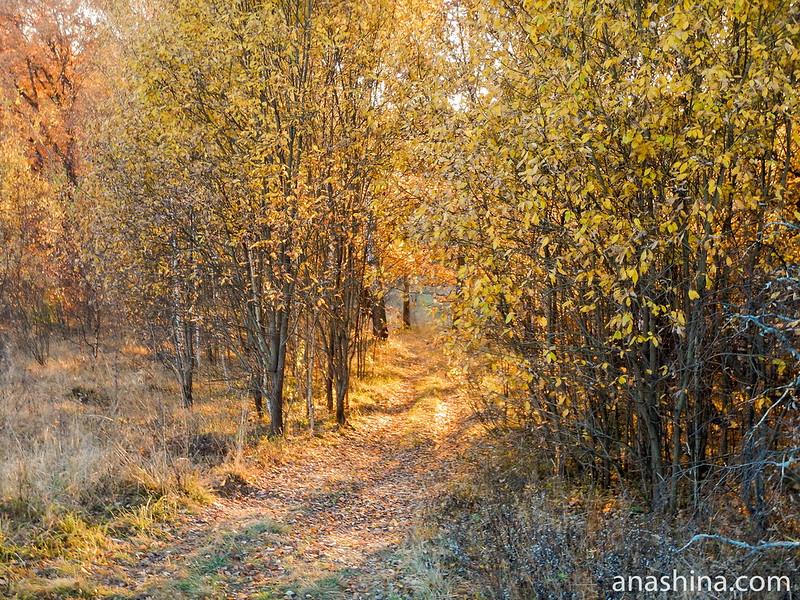 Золотая дорога, Московская область