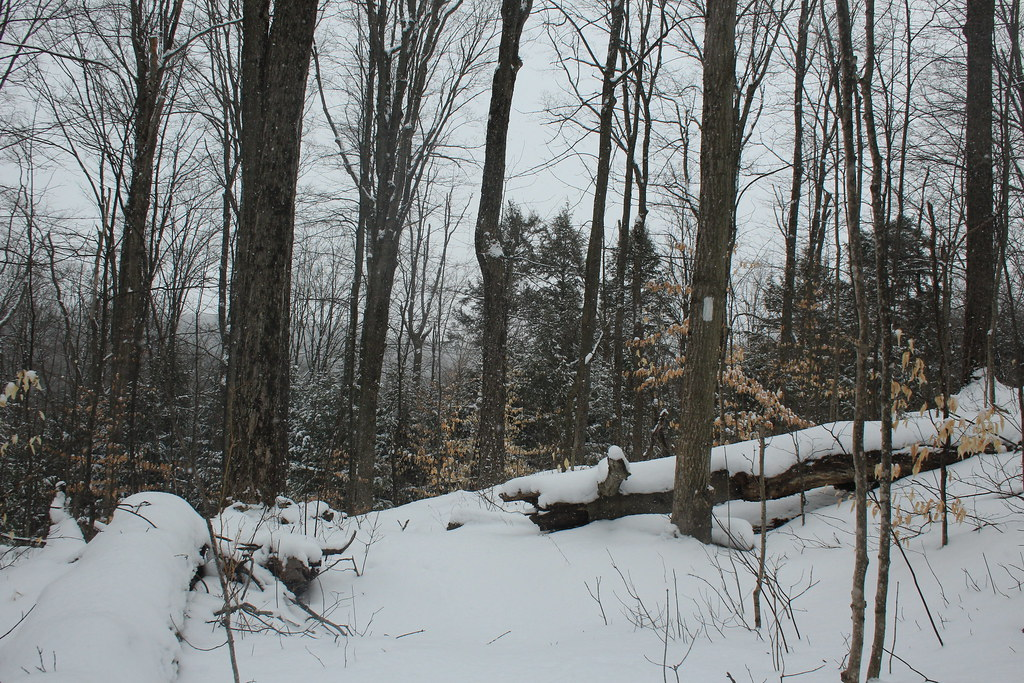 Bruce Trail in Beaver Valley