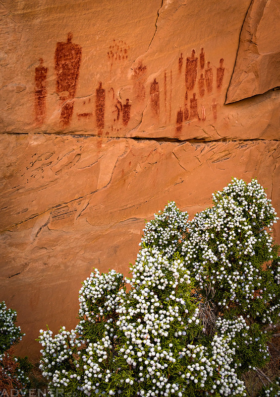 Juniper Berries & Pictographs