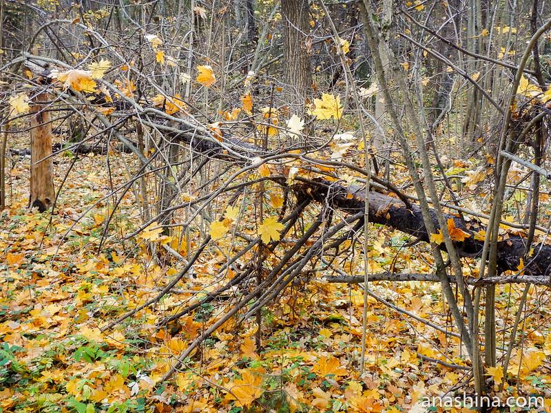 Упавшее дерево, Московская область