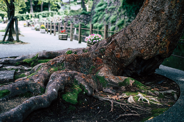 すがる樹木