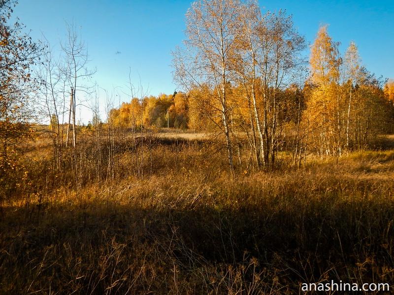 Зарастающее поле, Московское область, Протасово