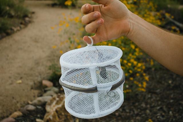 hummingbird banding in southern Arizona