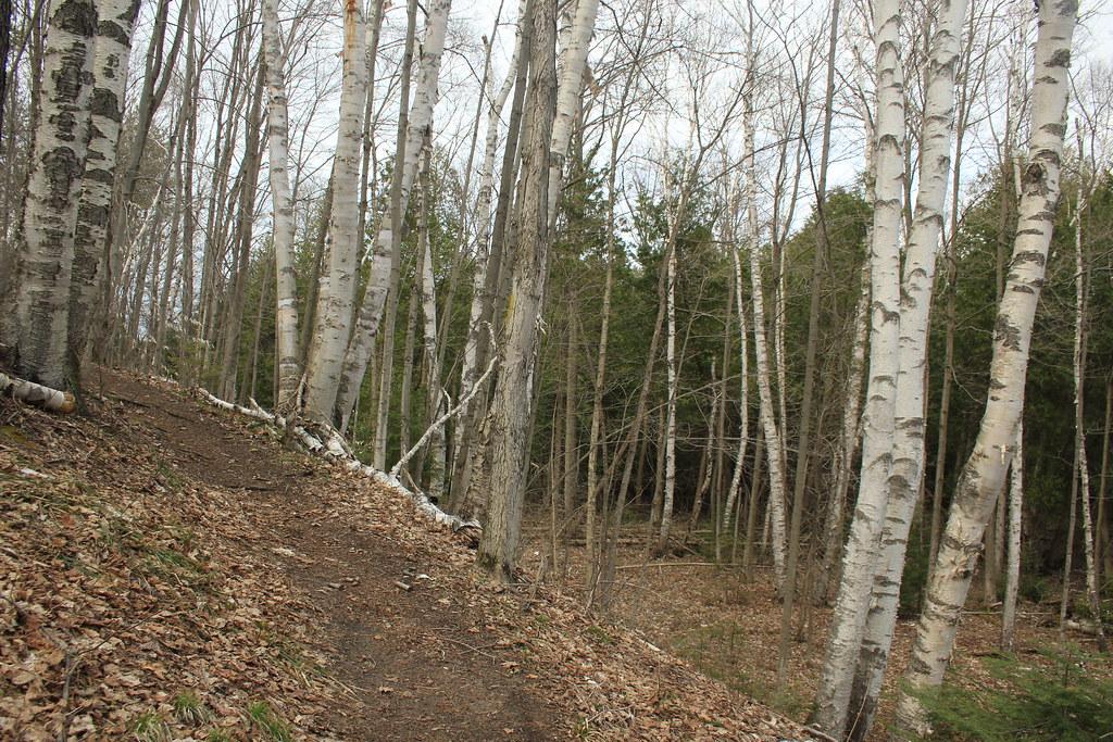 Sauble Falls PP Trail