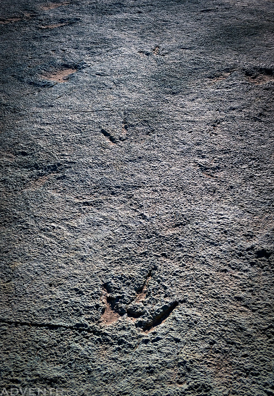 Three Smaller Dinosaur Tracks