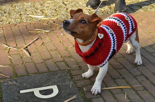 犬用ウエアで冬の外出を楽しむ犬