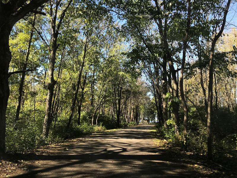 Sun-dappled road at Lone Point Shelter