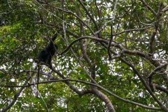Een dag na aankomst ging ik de jungle in op zoek naar gorilla's, maar dit dier was wat er het dichtste bij kwam.