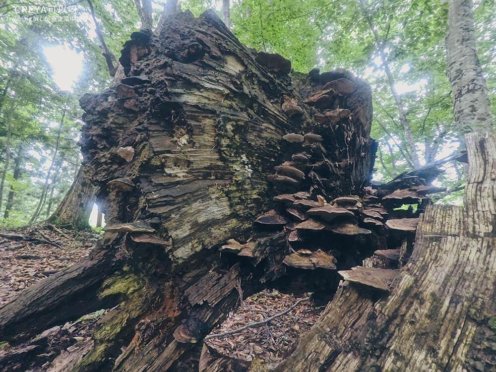 20181018 | 行走在日本東北 | 治癒之森的一堂生命課程,健行在自然首都的福島只見町 11.jpg