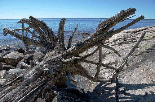 Lake Superior Park - washed up tree trunk on the lake