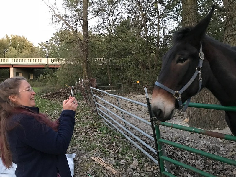 Writer Sylvia Shults with Larry the canal boat mule