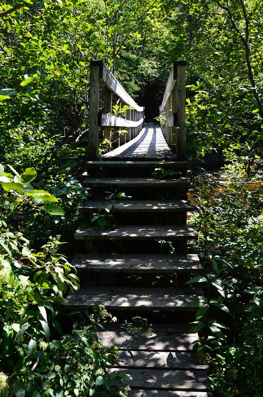 Lake Superior Park- Steps on Orphan Lake Trail