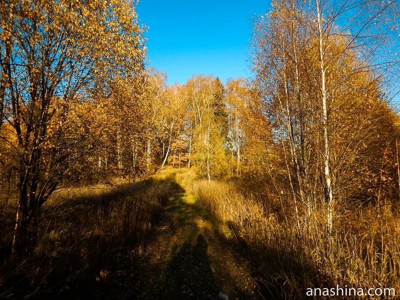 Протасово, Московская область, осень