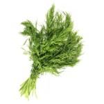 Fennel leaf