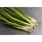 spring white onion