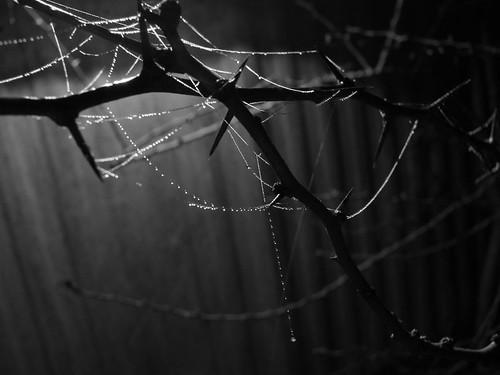 Thorns and Threads