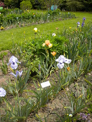 Schreiners Iris Display Garden Oregon