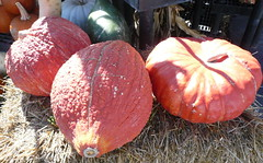 Ace Hardware Pumpkins