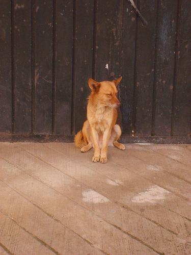 perro en mexico