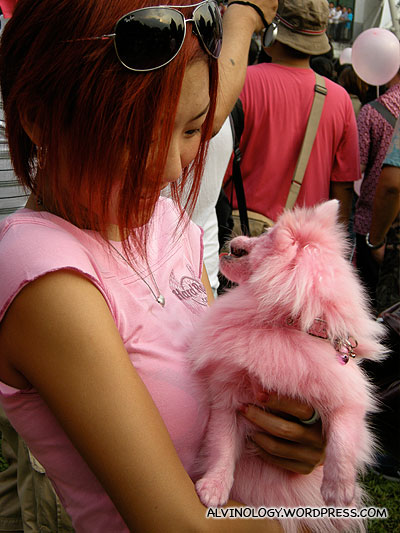 Gosh! A pink-dyed dog!